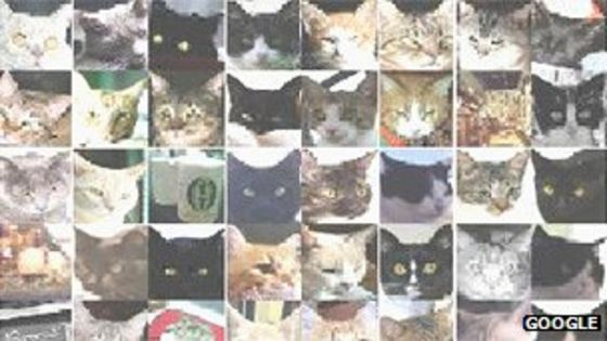 Google machine learning - cats